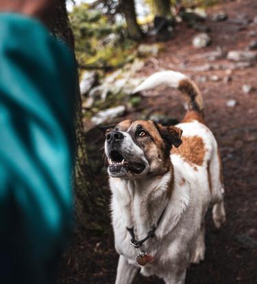 Wolf Creek Run Resort Dog
