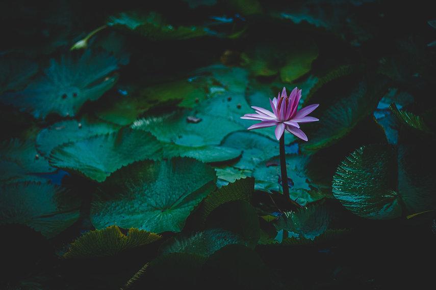 Image by Vivek Doshi