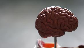 Com'è fatto il cervello?