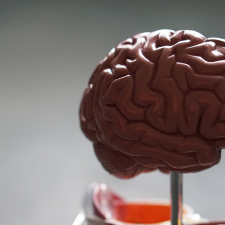 Brain Fitness: Is Your Brain Fit Enough?