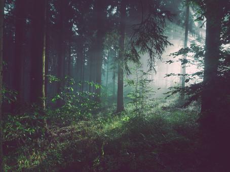 Perdita di biodiversità e nuove pandemie. Esiste una  relazione?