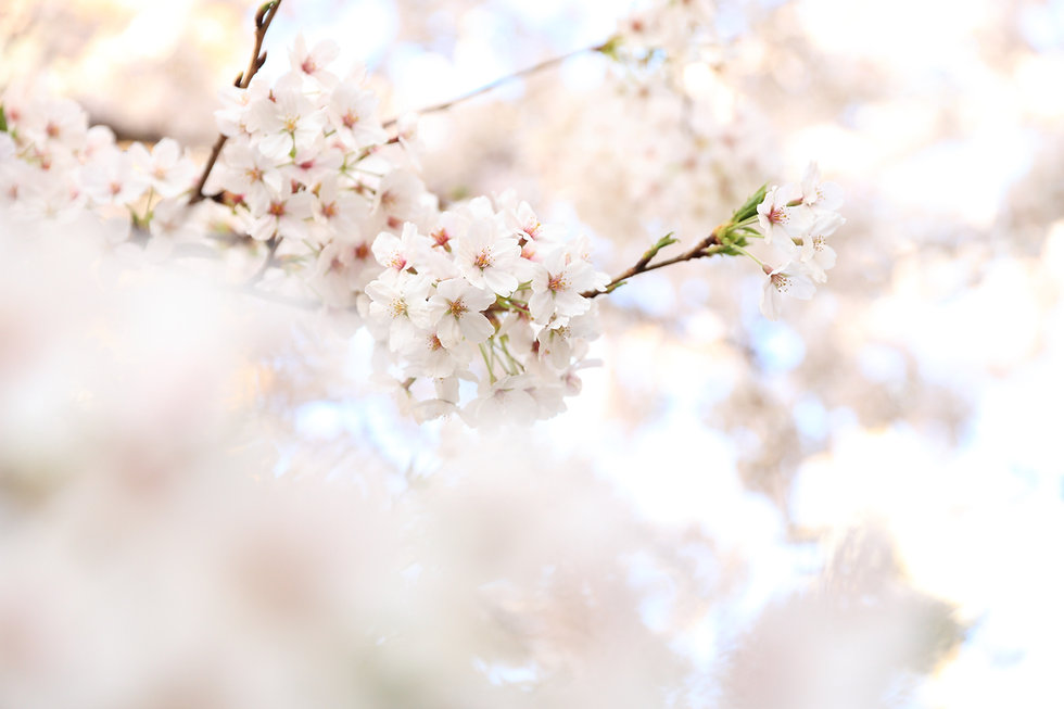 Image by kazuend