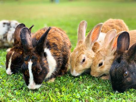Grundfutterübersicht für Kaninchen