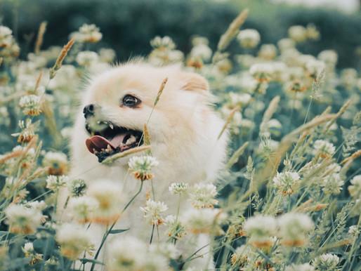 ケースファイル〜二つの顔を持つ犬〜