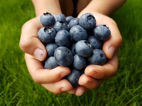Are blueberries healthy?