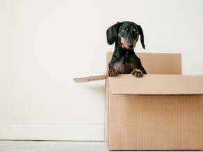 Four Tips for Moving with Pets