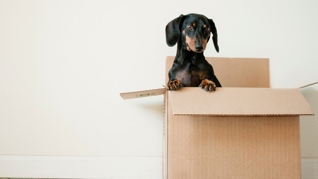 Pets and Moving