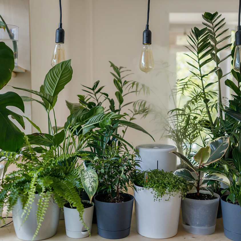 Houseplants 101 - A Beginners Class In Caring For Houseplants