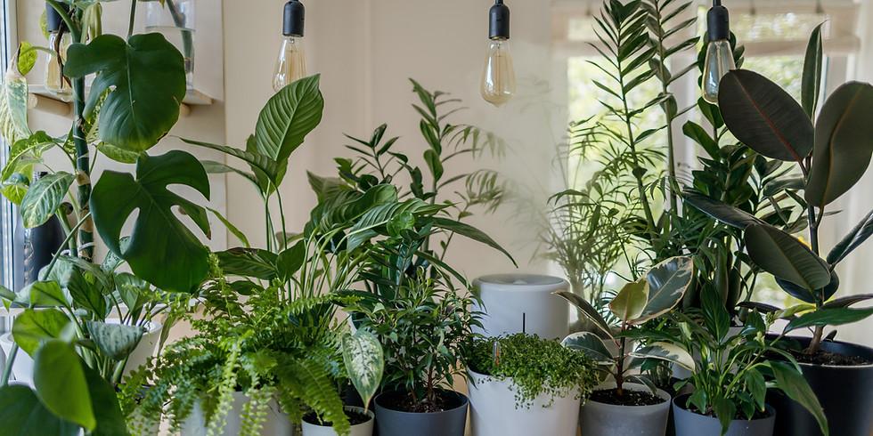Houseplant Plant Swap