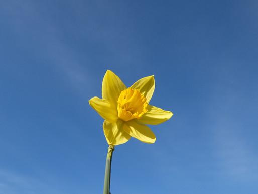 Flowers: A Dynamic Global Industry