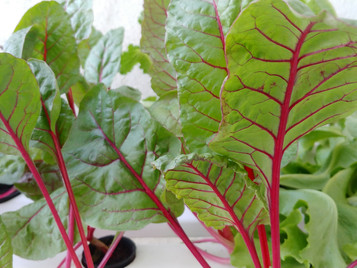 More African Farms Turning To Hydroponics