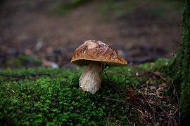 Image de Thimo Pedersen