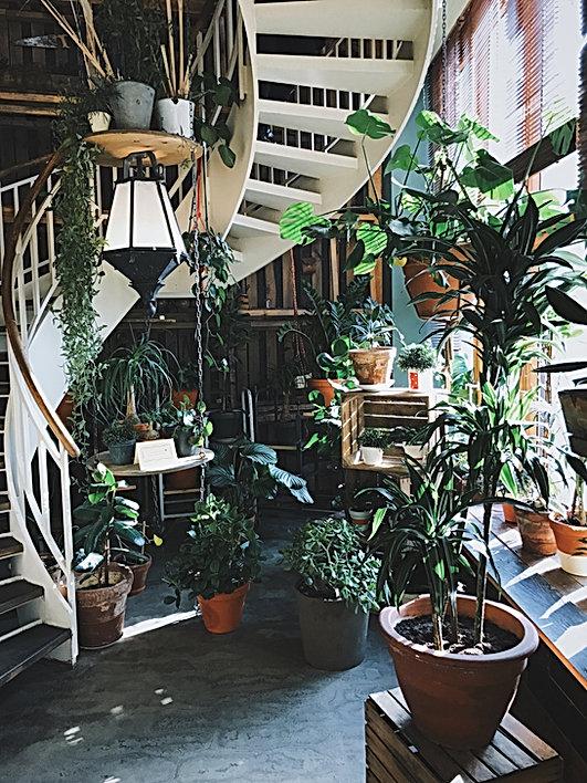 The greenhouse at marigold merchant