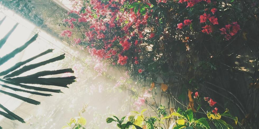 Meet Your Plant Spirit Guide