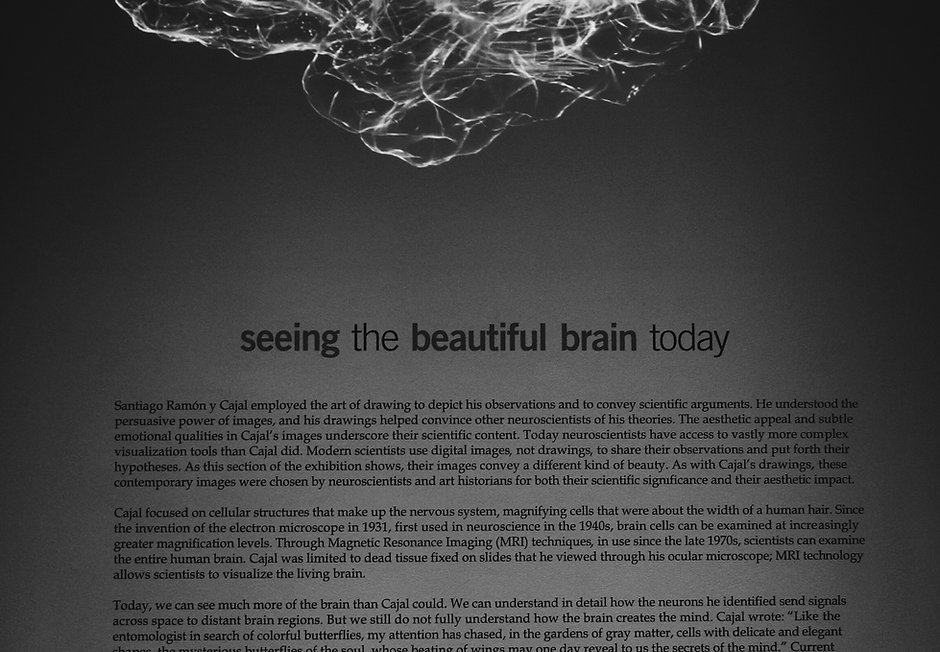 Neuroscience Windows to the Nervous System