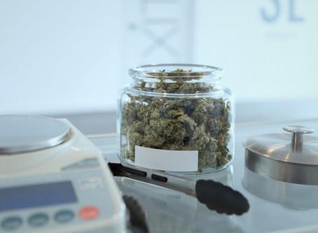 Please Choose to Buy Legal Cannabis
