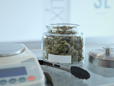 Cannabis Use Associated with Reduced Opioid Usage
