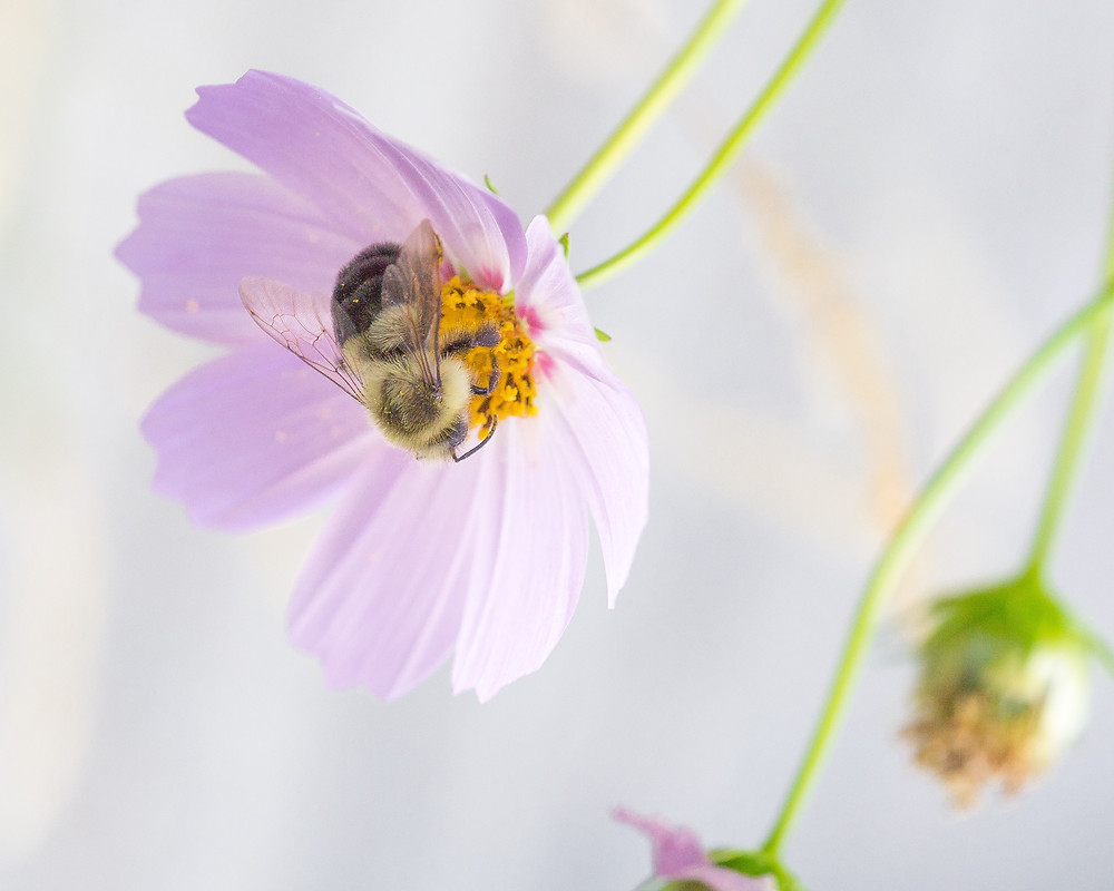 How to turn your garden into a wildlife sanctuary