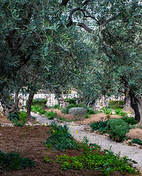 Olive Oil Routes