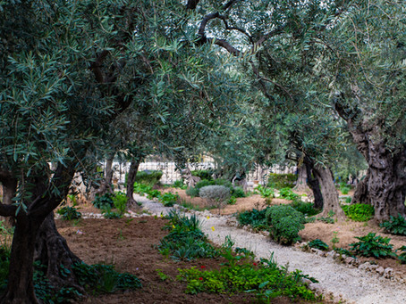 Lingering in Gethsemane