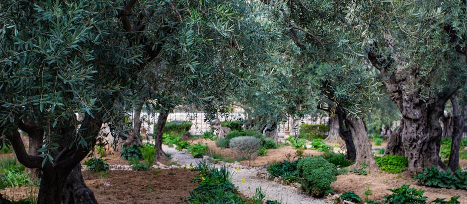Израиль | Авней Хефец