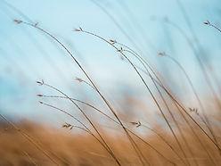 Image by Aaron Burden