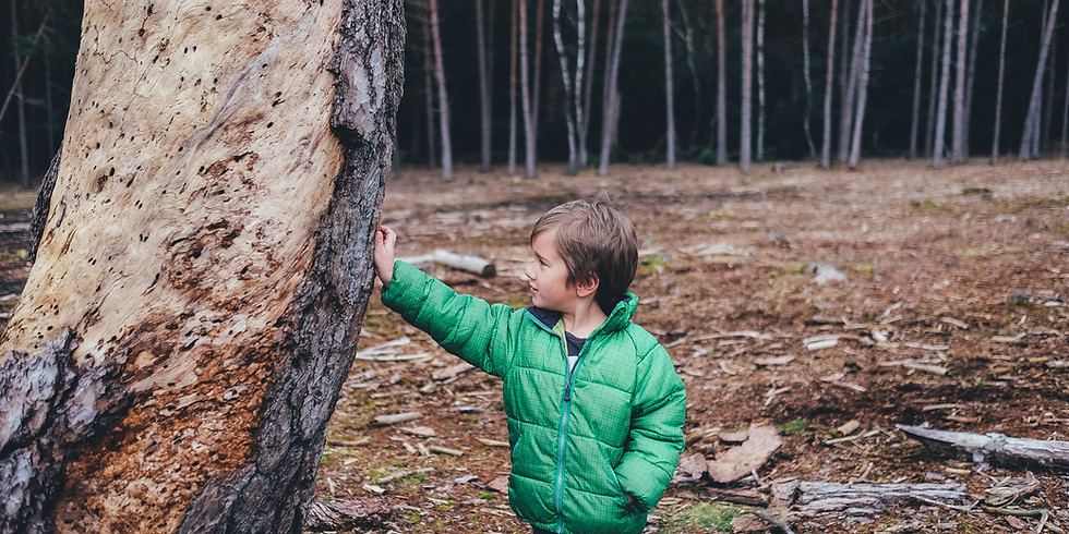 Woods of Wonder: Spirituality in Nature Family Program