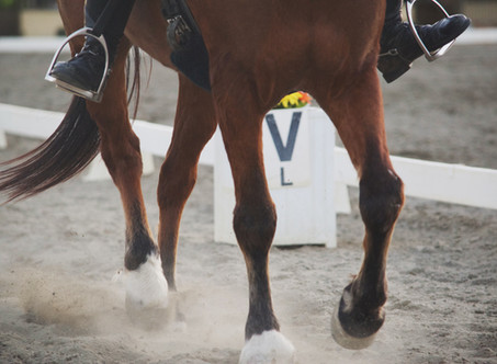 HOW TO CALL A DRESSAGE TEST…
