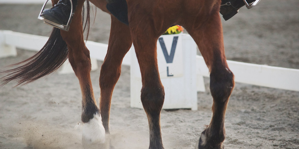 Sunday 1st August Unaffiliated Dressage