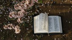 5 cărți care-ți pot face primăvara mai frumoasă