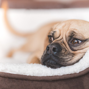 Top 5 dog beds and how to improve your dog's sleep