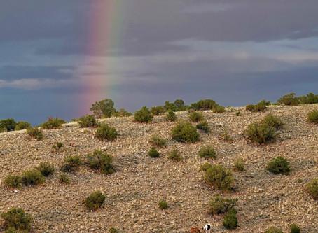 Un sanctuaire pour les chevaux sauvages sur la Nation Navajo.