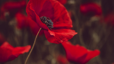 Lest We Forget - Sunday Service 8.11.20