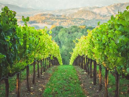 Featured Wines: Tasting 2/6