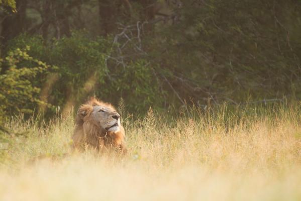האריה קופץ רק פעם אחת - טיפול מחובר - יואב אריה לוי