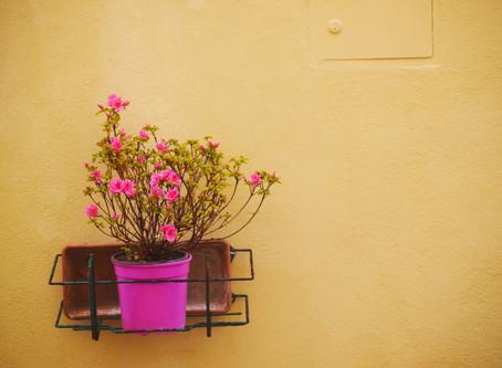 Je veux mettre un pot de fleurs devant mon commerce :