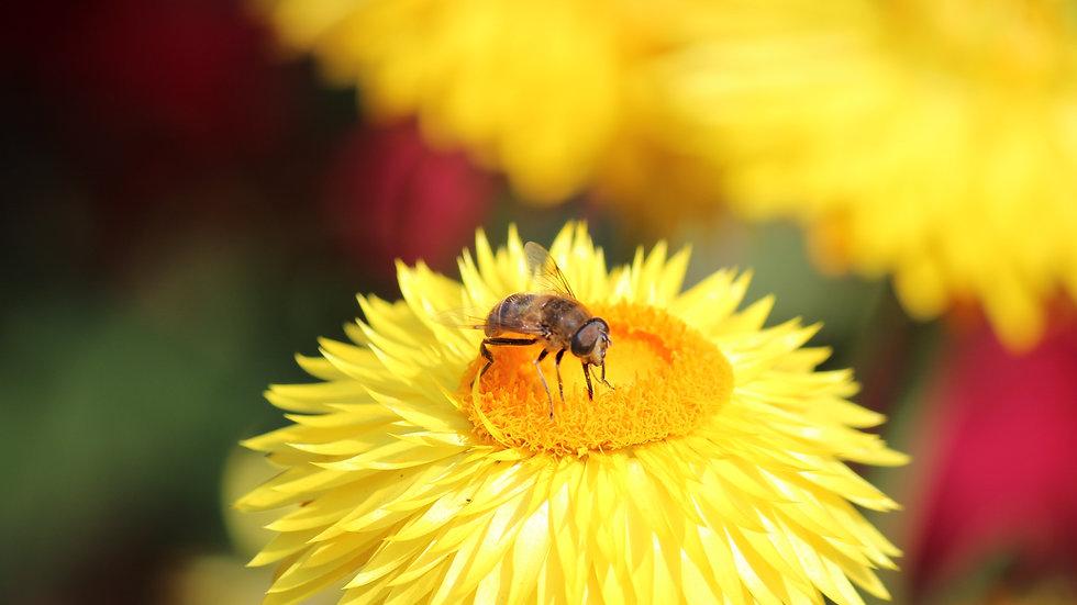 Parrainer 10000 abeilles