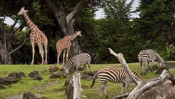 Port Lympne Zoo