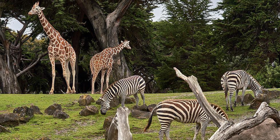 (VIRTUAL) Zoo Story & Animal Craft