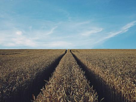 Fremtidens landbruk i et klima- og miljøperspektiv