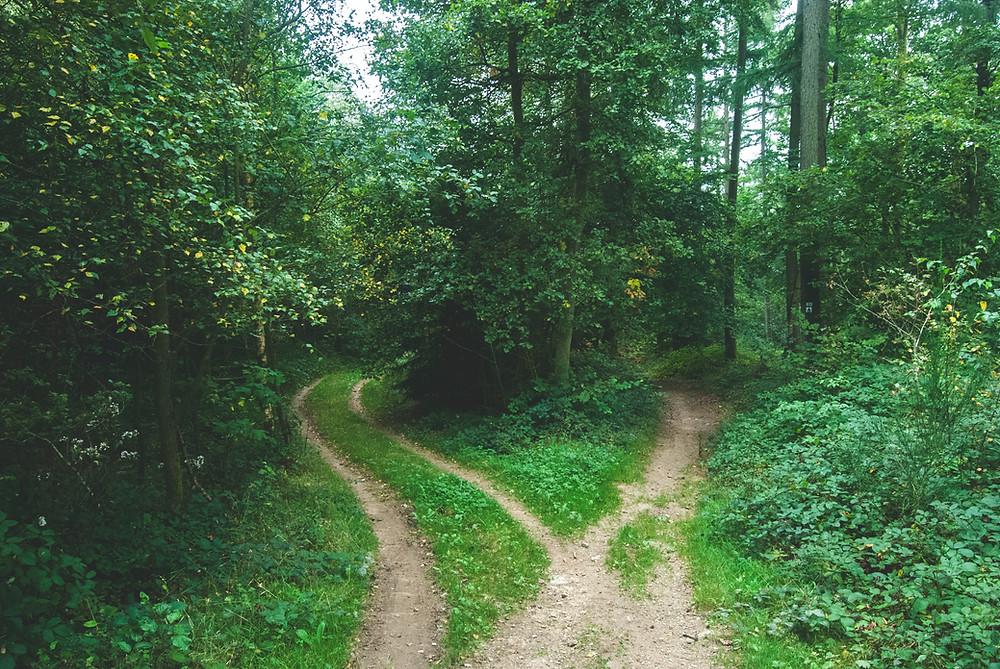 La croisée des chemins, des potentiels de vie