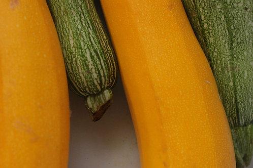 """Zucchini Yellow- 2.5"""" Pot"""
