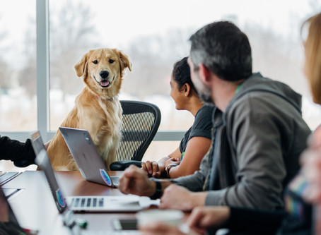 11 dog-friendly Vancouver companies hiring this month