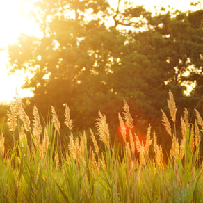 The Ninth Sunday after Pentecost (7/25/2021)