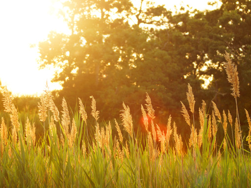 Warm Weather Wellness: 7 Tips to Promote Health and Well-Being This Summer