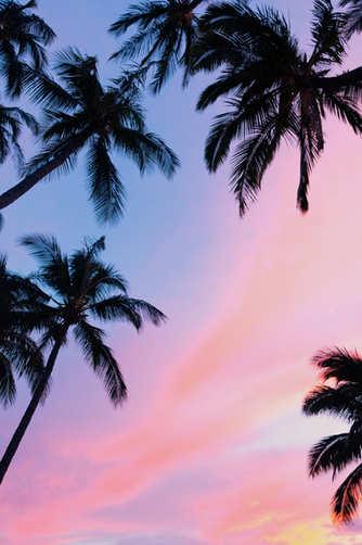 Sunset skies through palm trees