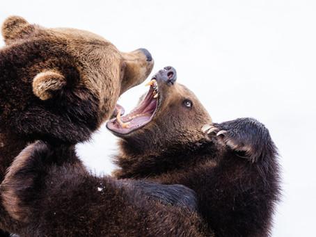 8 Quick Steps: My Bear Market Plan