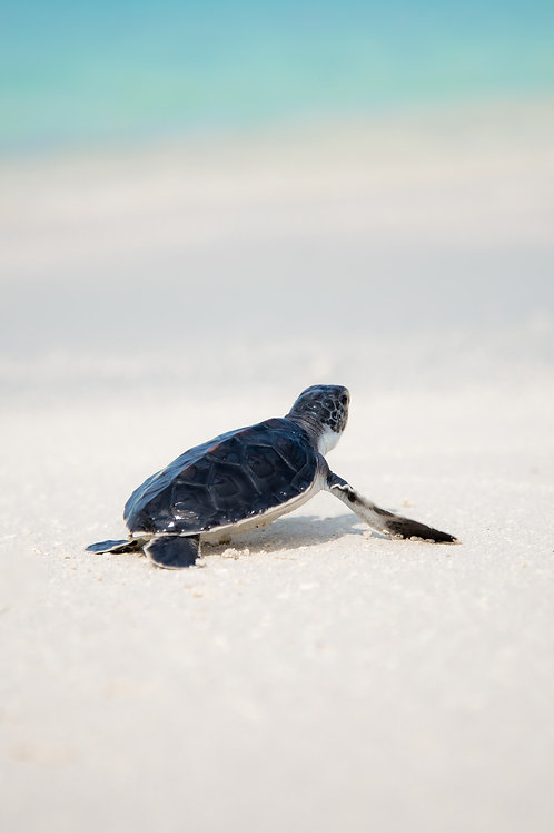 Turtle Spanning