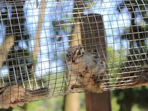 Oravarattas juhil on vaja peatuda peatumata