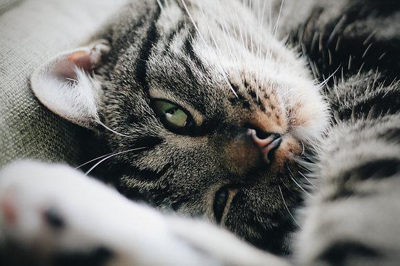 Kurs Behawiorysta kotów